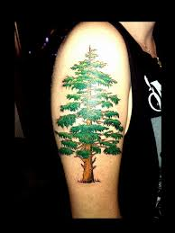 evergreen tree pictures to pin on tattooskid