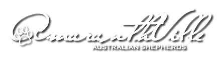 hsf 4 australian shepherd amaranthville hsf4 hereditary cataract test and hereditary cataract