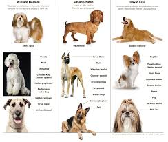 Types Of Dogs Different Types Of Dog Breeds