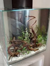 Fluval Edge Aquascape Our Very First Tank The Fluval Edge 46 Litre Uk Aquatic Plant