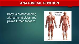 Directional Terms Human Anatomy Anatomical Terms Directional Terms