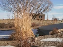 ornamental grasses for winter interest perennial favorites