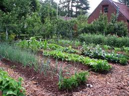 using mulch in your vegetable garden grow real food organic