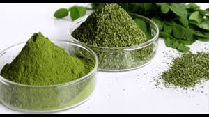 herb moringa benefits the herb that kills cancer and stops diabetes