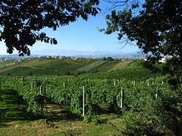 Getting There U0026 Around Italian by Italian Wine Wikipedia
