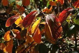 golden orange color vibrant fall color u2013 life on the greenway