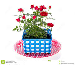 red roses in a flower pot stock image image of party 17517273