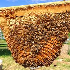 the practical beekeeper beekeeping naturally bush bees by