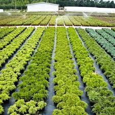 econom cop cooperation of plants growing nurseries