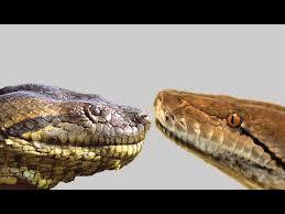 film ular phyton giant anaconda vs giant python youtube