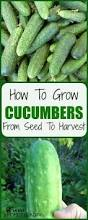 how to buy seeds for your garden buy seeds gardens and