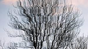 albero vanitoso albero vanitoso specchiato acqua regia foto n 5 partecipante