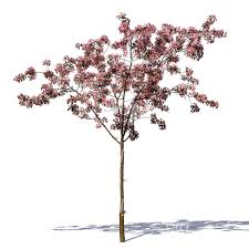 cut out small blooming cherry tree cut out trees and plants