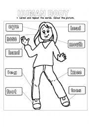 human body for kids worksheets