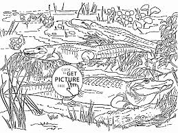 alligators coloring page for kids wild animal coloring pages