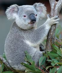 australia is a unique wonderland of animals swain destinations