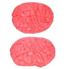 si e des motions dans le cerveau faux effrayant cerveau humain décoration et prop