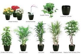live indoor plants best indoor plant best live indoor plants photos interior design