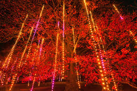 illumination tree lights at the morton arboretum by the numbers