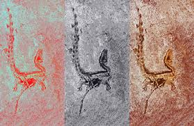 feathered dinosaur colors bloomed 150 million years ago