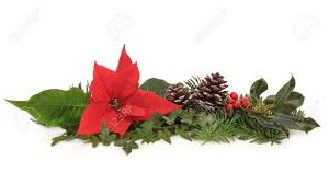 christmas decoration of poinsettia flower holly ivy pine cones