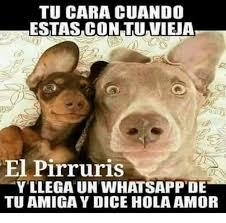 Memes Del Pirruris - 25 best memes about pirruris pirruris memes