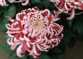 Flowers Colors Meanings - the meaning behind 8 different types of popular funeral flowers