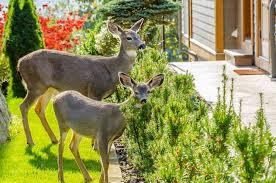 Delaware landscapes images Is your landscape deer ready cider mill landscapes jpeg