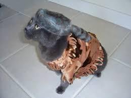 Cat Halloween Costumes Cats 13 Halloween Costumes Cats Costumes Mousebreath