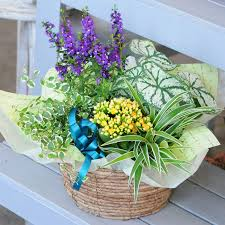 next day delivery gifts hanako rakuten global market potted flowers gifts potted us pot