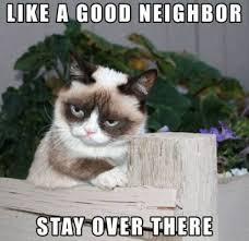 Monday Cat Meme - simple grumpy cat monday meme kayak wallpaper