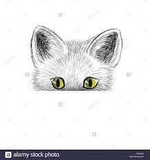 cat kitten face sketch cat isolated cat head icon looking at