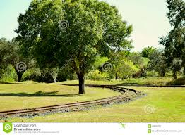 track around a tree stock photo image 84604771