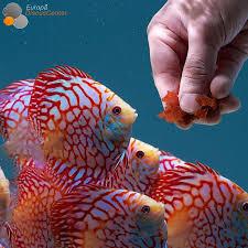 1514 best fishies images on fish tanks aquarium