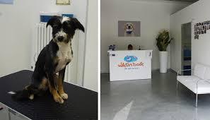 bagno per cani toelettatura cani a bergamo a partire da 14 90 invece di 35