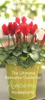 Beautiful House Plants 100 Flowering Indoor Plants Best 10 Exotic House Plants