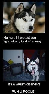 Clean Animal Memes - why dogs are so much better than cats but they can t spell vacuum