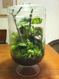 unique woodland themed terrarium in a huge footed by sweetdarias