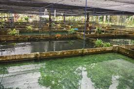 ornamental fish conference to return to sri lanka in 2017