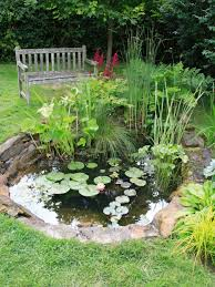 Small Garden Pond Ideas Best Tips For Starting A Small Garden Pond Ponds Ideas Only On Diy