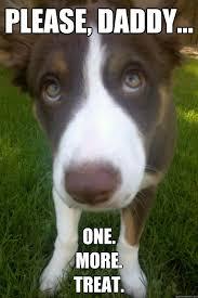Puppy Eyes Meme - puppy eyes memes quickmeme