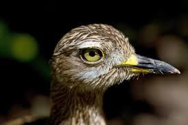 bioparc birds part i valencia bioparc