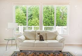 Bright Green Sofa Family Cat Sitting On White Leather Couch And Large Windows