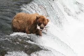 Alaska wildlife images Alaska wildlife jpg