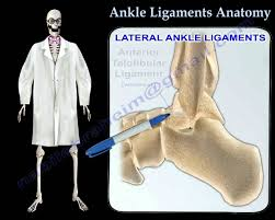 Tibiofibular Ligament Injury Ankle Ligaments Anatomy Everything You Need To Know Dr Nabil