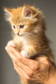 free photos of cute kittens cats u0026 kittens