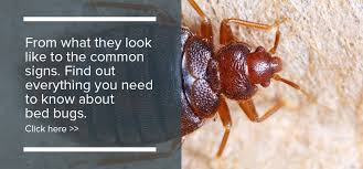 What Causes Bed Bugs To Come Out Bed Bug Bites What You Need To Know Debugged