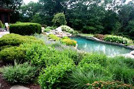 Landscaping Around Pools by Great Lessons You Can Learn From Plants Around Pools Chinese