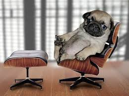 12 best cats and dogs who love charles eames images on pinterest