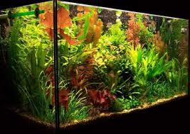 best led light for planted tank lighting for a planted aquarium pethelpful